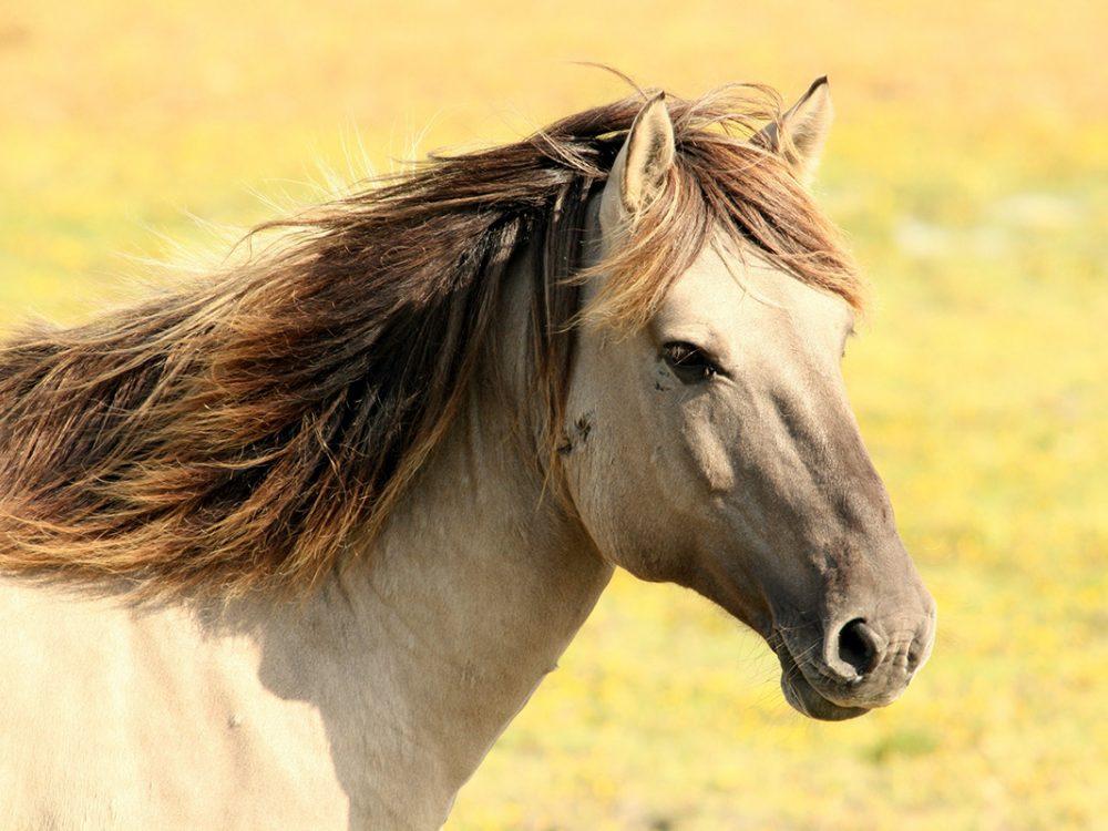 Lundi 17 février 2020, Workshop d'apprentissage facilité par les chevaux au service des Coachs.
