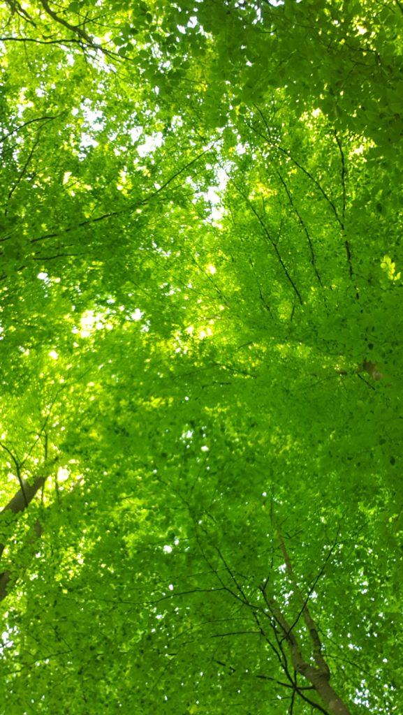 arbres feuilles nature télétravail sensink