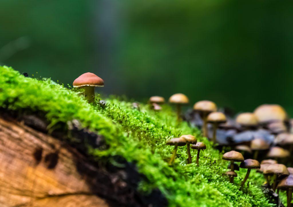 champignon filaments nature télétravail sensink