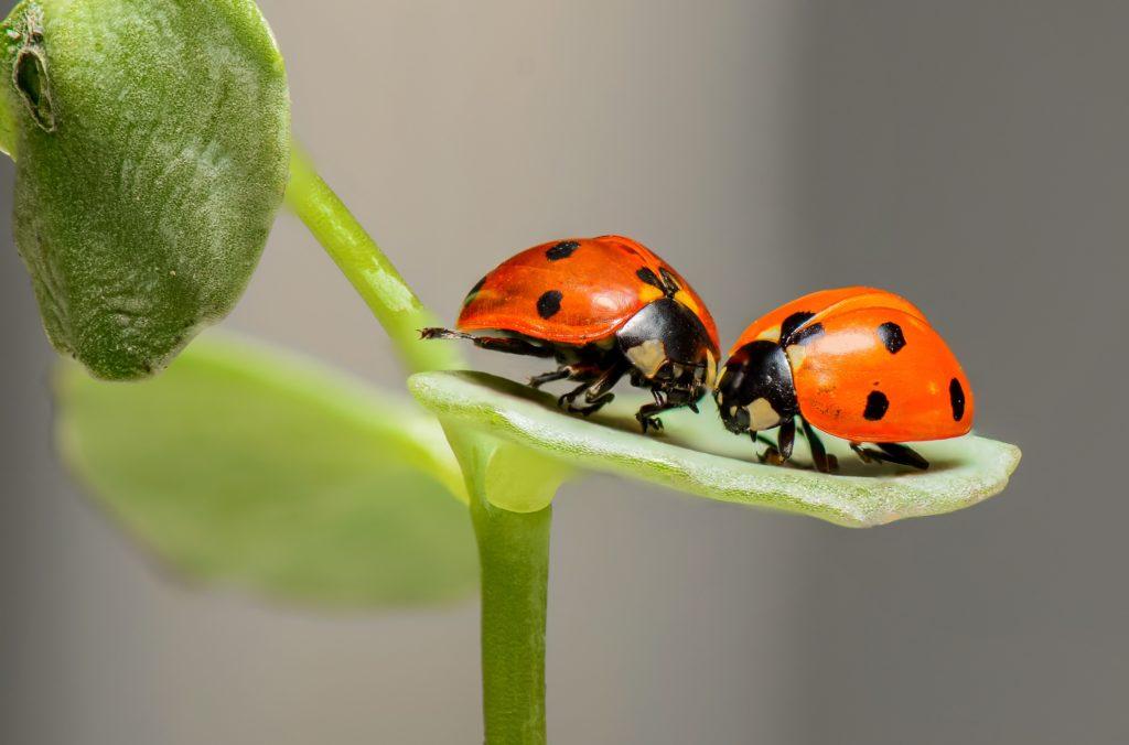 coccinelles nature écologie relationnelle humaine