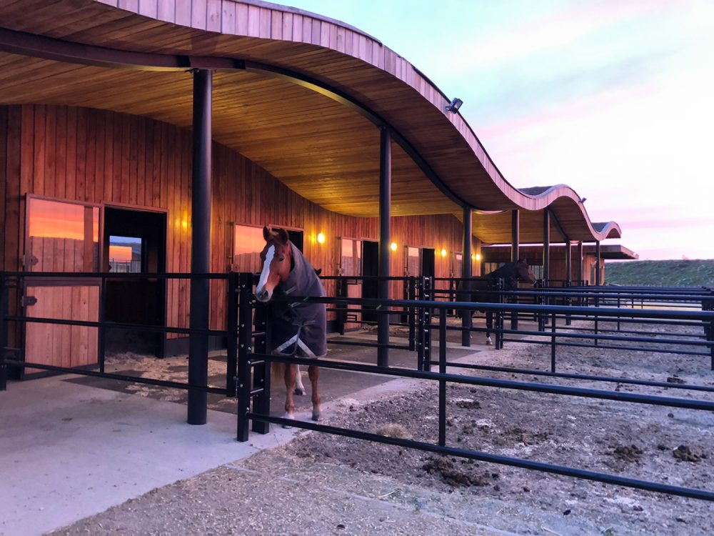 Une journée d'apprentissage facilitée par les chevaux pour l'ADP, l'Association des Professionnels RH.