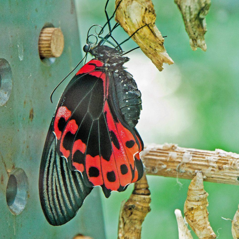 Ne plus jamais laisser nos ailes au vestiaire parce que le monde a besoin de notre singularité.