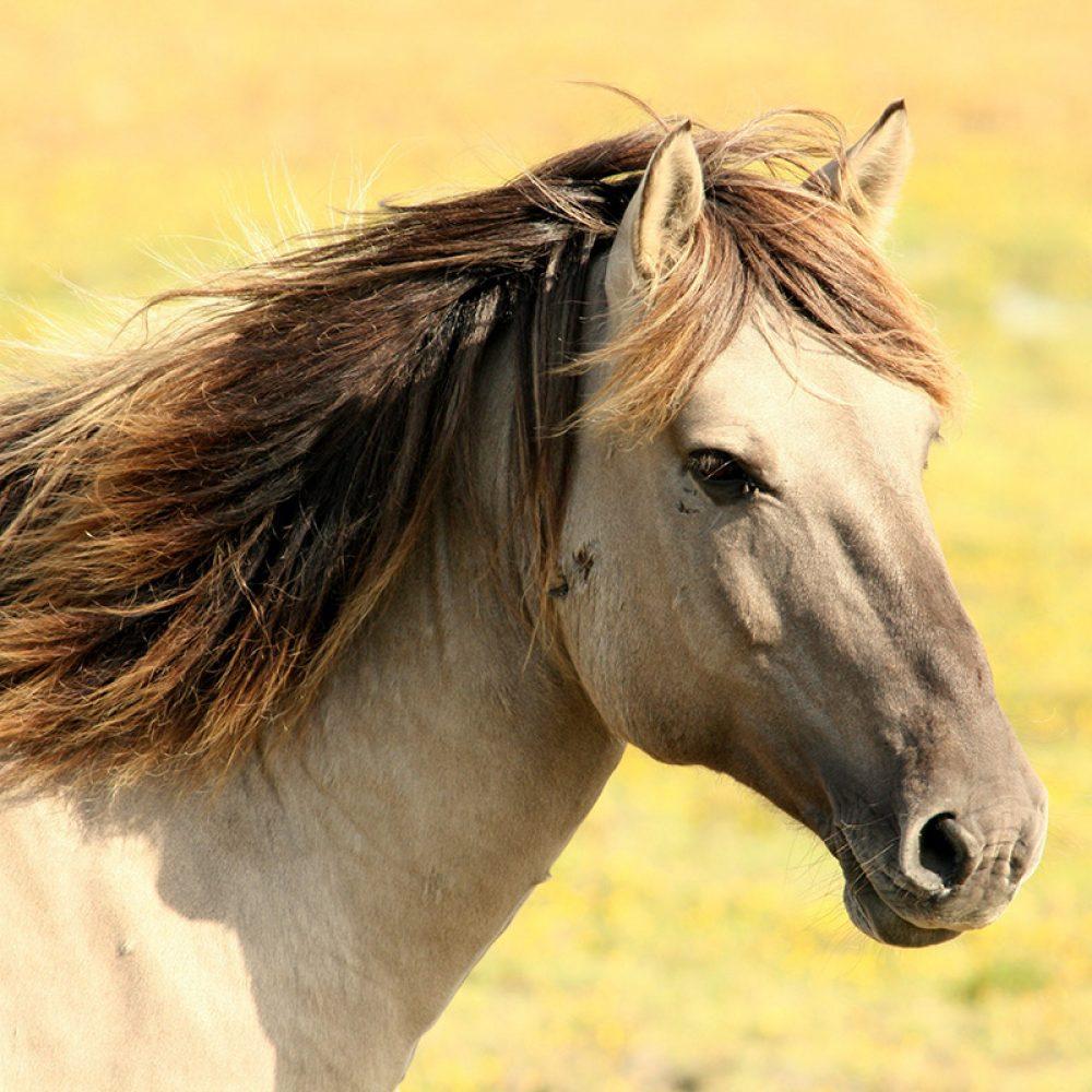 Notre prochain workshop d'apprentissage facilité par les chevaux au service des Coachs en transition.