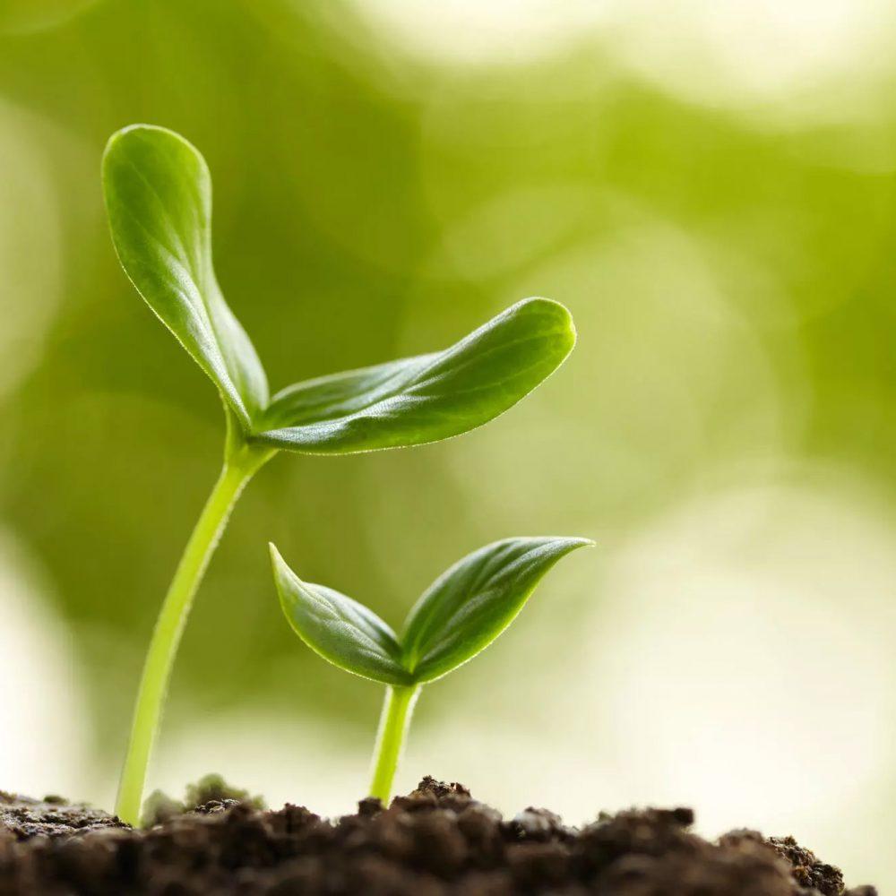 Comme la graine… nous avons tous la capacité de résilience en nous qui nous permettrait de construire un nouveau monde.