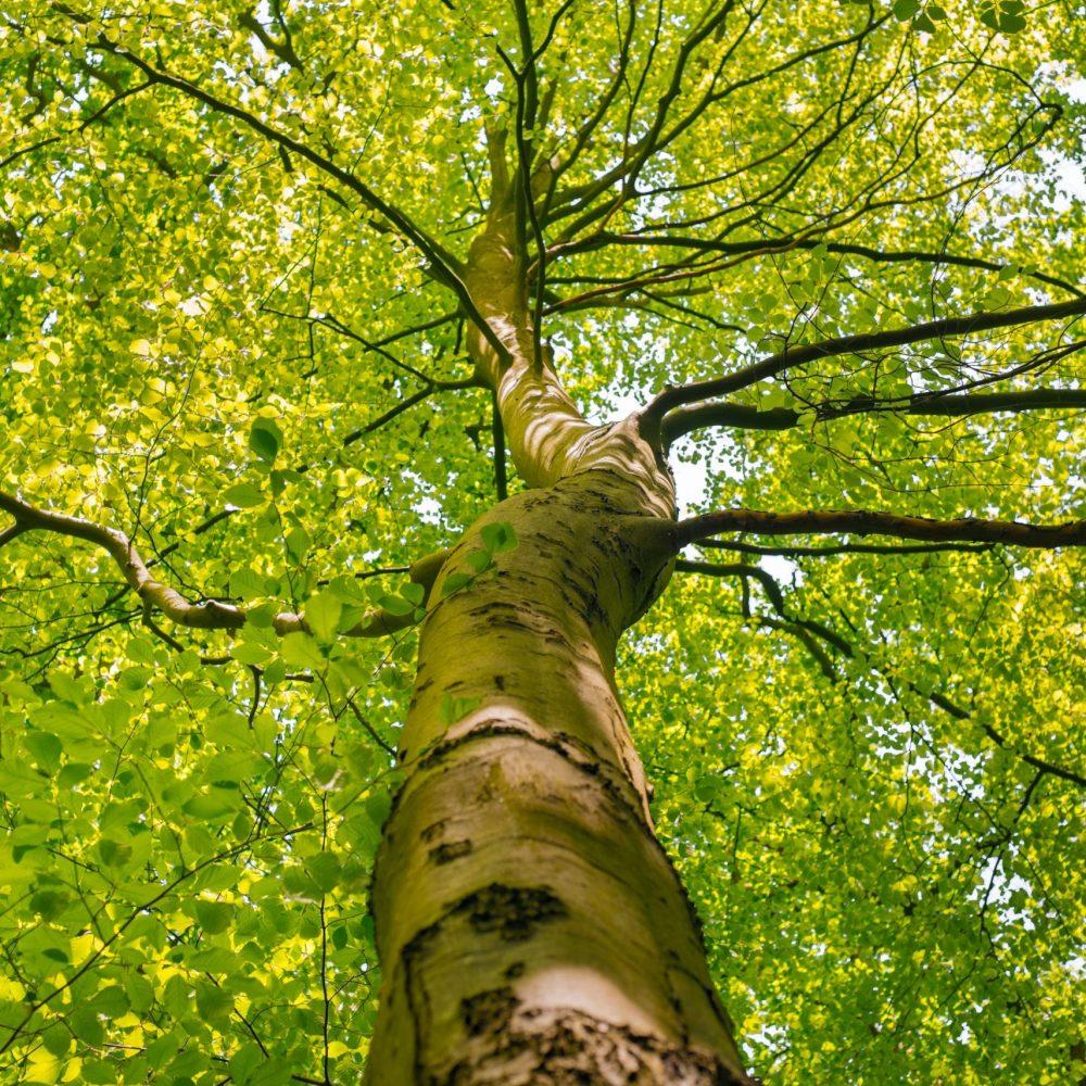 Nos arbres… des experts en télétravail. Chez eux, le télétravail rime avec «soin du Vivant». Chez nous, cela a fait poussé les 4 arbres Seedessence®, un canevas solide à découvrir…